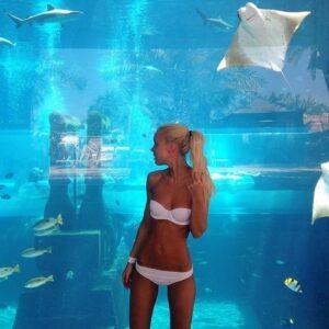 Оборудование аквариумов и террариумов бесплатно